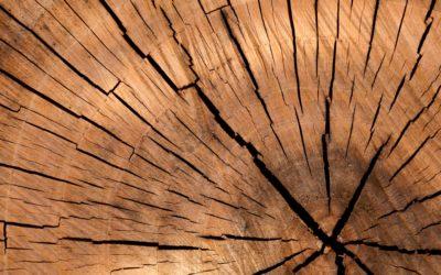 Free Seasoned Firewood