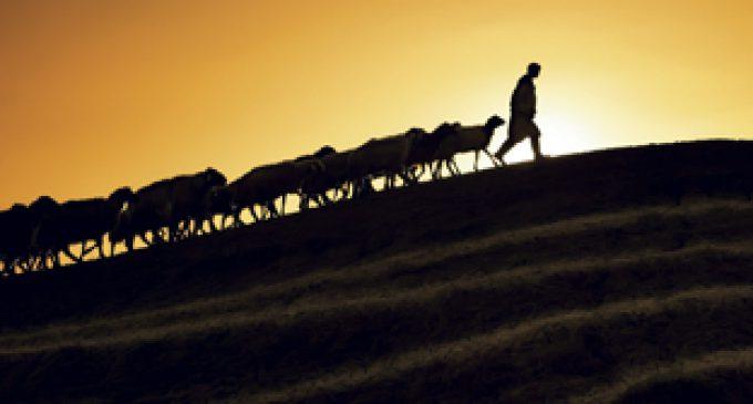 Shepherd, Serve and Nourish